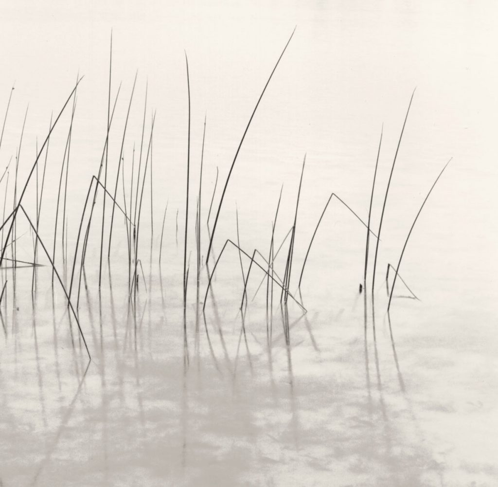 Marsh seascape black and white photograph